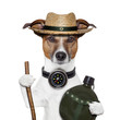 hike compass hat dog