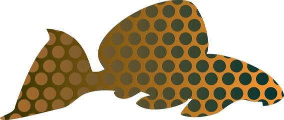 Leopard pleco - aquarium fish