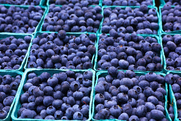 Sea of Blueberries Horizontal
