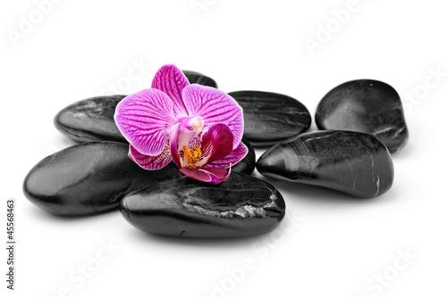 Fototapeten,kurort,massage,orchidee,steine