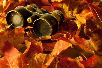 Retro binoculars and autumn leaves  Autumn background
