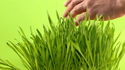 Human hand touching green grass