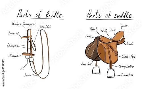 Fototapeta saddle-bridle