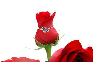 Wedding ring round a rose