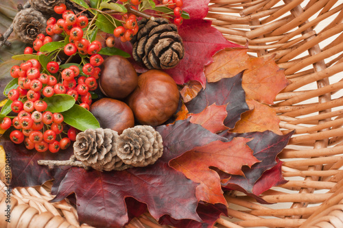Autumn collection, leaves, conkers, pinecones, berries,.