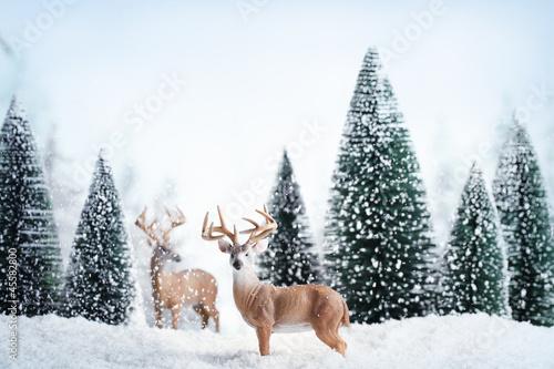 Fototapeten,weihnachten,karte,feier,tier