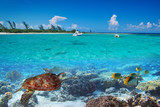 Fototapety Caribbean Sea scenery with green turtle in Mexico