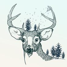 Winterrotwild