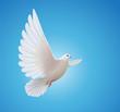 white dove - 45587245
