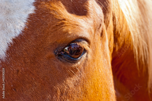 Friendly brown horse eye detail