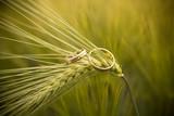 Fototapeta diamenty - dwa - Biżuteria