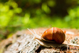 Snail  in the woods