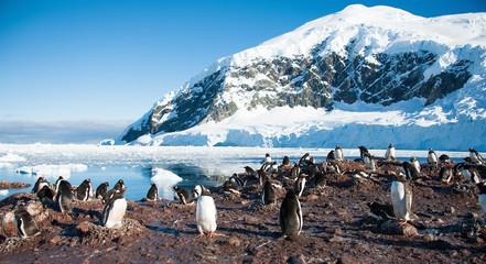 Adelie penguins on the Antarctica beach
