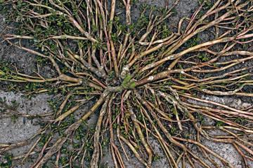 Nature Vascular System Closeup