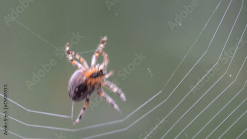 spider making a web