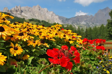 MOUNTAIN FLOWERBED