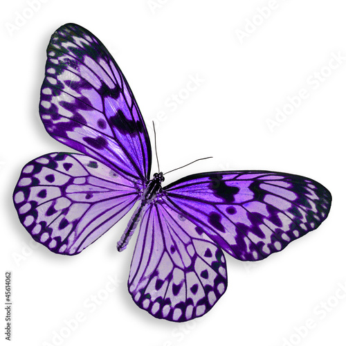 Tuinposter Vlinder Purple Butterfly flying