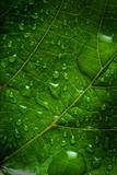 Fototapeta tło - tło - Organiczne