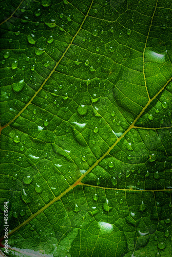 zielony-lisc