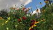 flowers against a cloudy sky. timelapse.