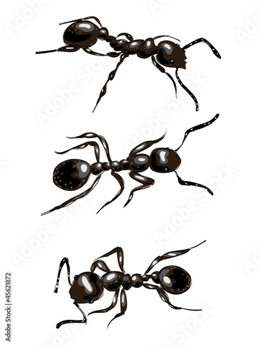 Black ants. Isolated on white background.