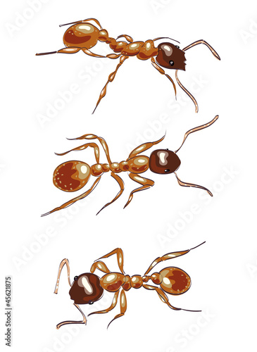 Red ants. Isolated on white background.
