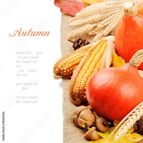 Autumn still-life with pumpkins and corn