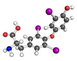 Triiodothyronine molecule