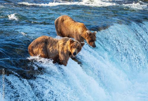 Papiers peints Ours Blanc Bear on Alaska