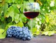 Rotwein und blaue Trauben