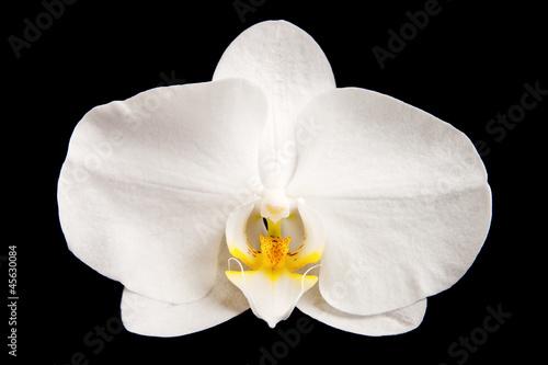 Fototapeten,schön,schönheit,botanical,botanik