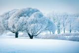 Fototapety Winter trees
