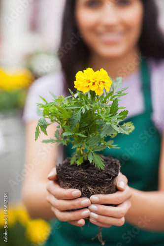 Woman holding a plant at the camera