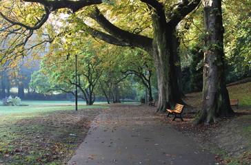 Grands arbres dans le parc