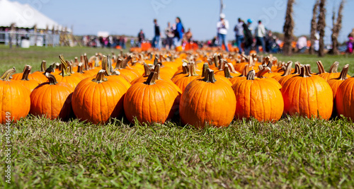 Rows of pumpkins on grassy field