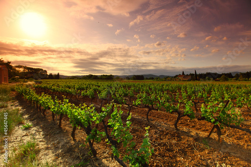 Orange Sky over Green Vineyard