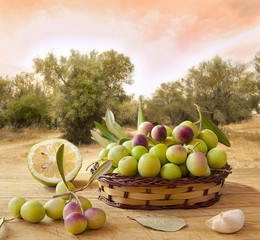 Aceitunas, condimentos, escena de olivares.