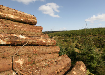 Freshly Cut Logs In A Pile / Logging