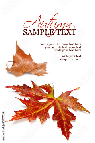 Two fall leaves on a white background