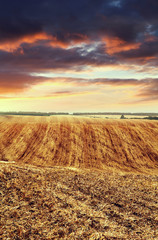 arable land