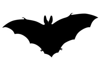 Bat silhouette (Plecotus austriacus)