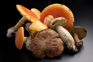 Funghi, ovuli e porcini
