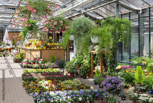Garden center selling plants in a greenhouse