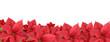 Red poinsettia, border