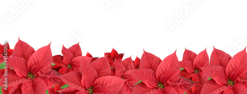 Red poinsettia, border