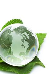 ガラスの地球儀と緑の葉