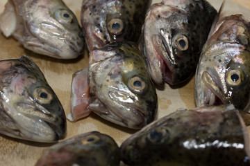 Trout fish heads