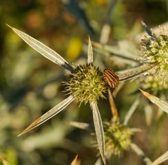 bug an flower