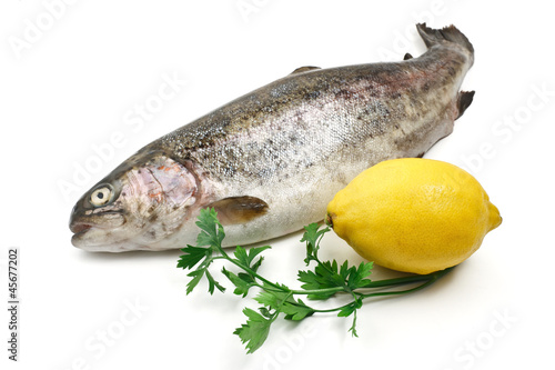 trota salmonata - trout over white background