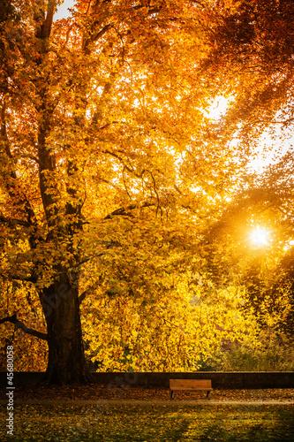 Fototapeten,herbst,herbstfarben,foliage,autumn leaf